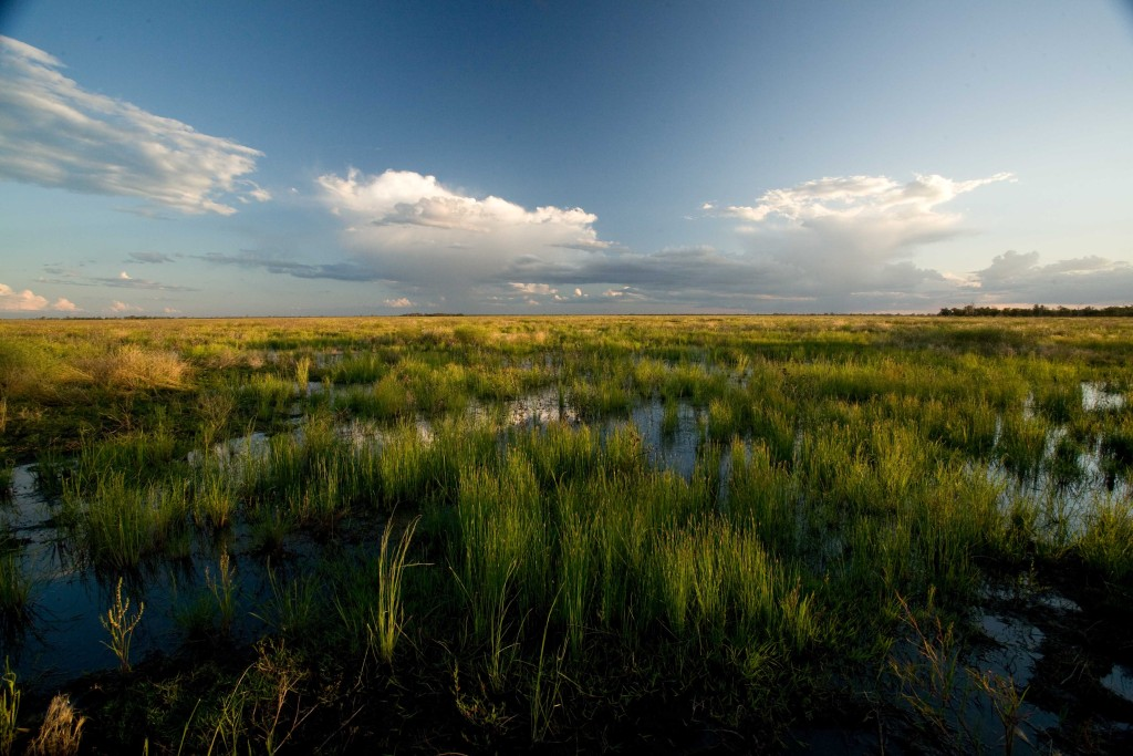Uninterrupted horizon, Macquarie Marshes (Photo: D. Herasimtschuk)
